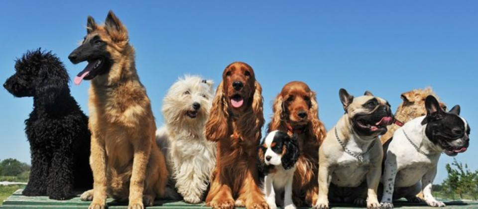 Come Cani & Gatti - I Cani, domenica 29 aprile